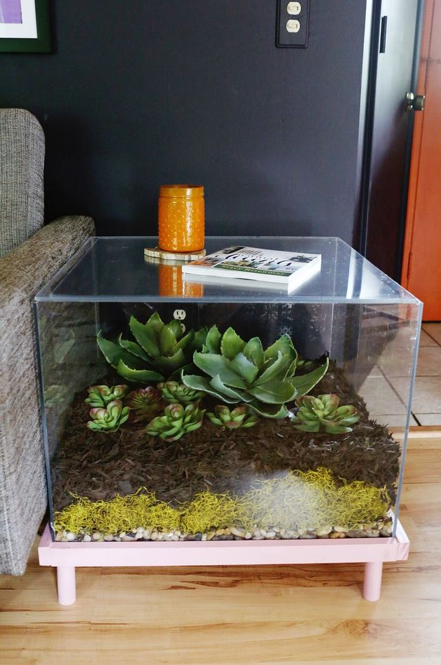Beautiful Succulent Garden Inside Your Coffee Table